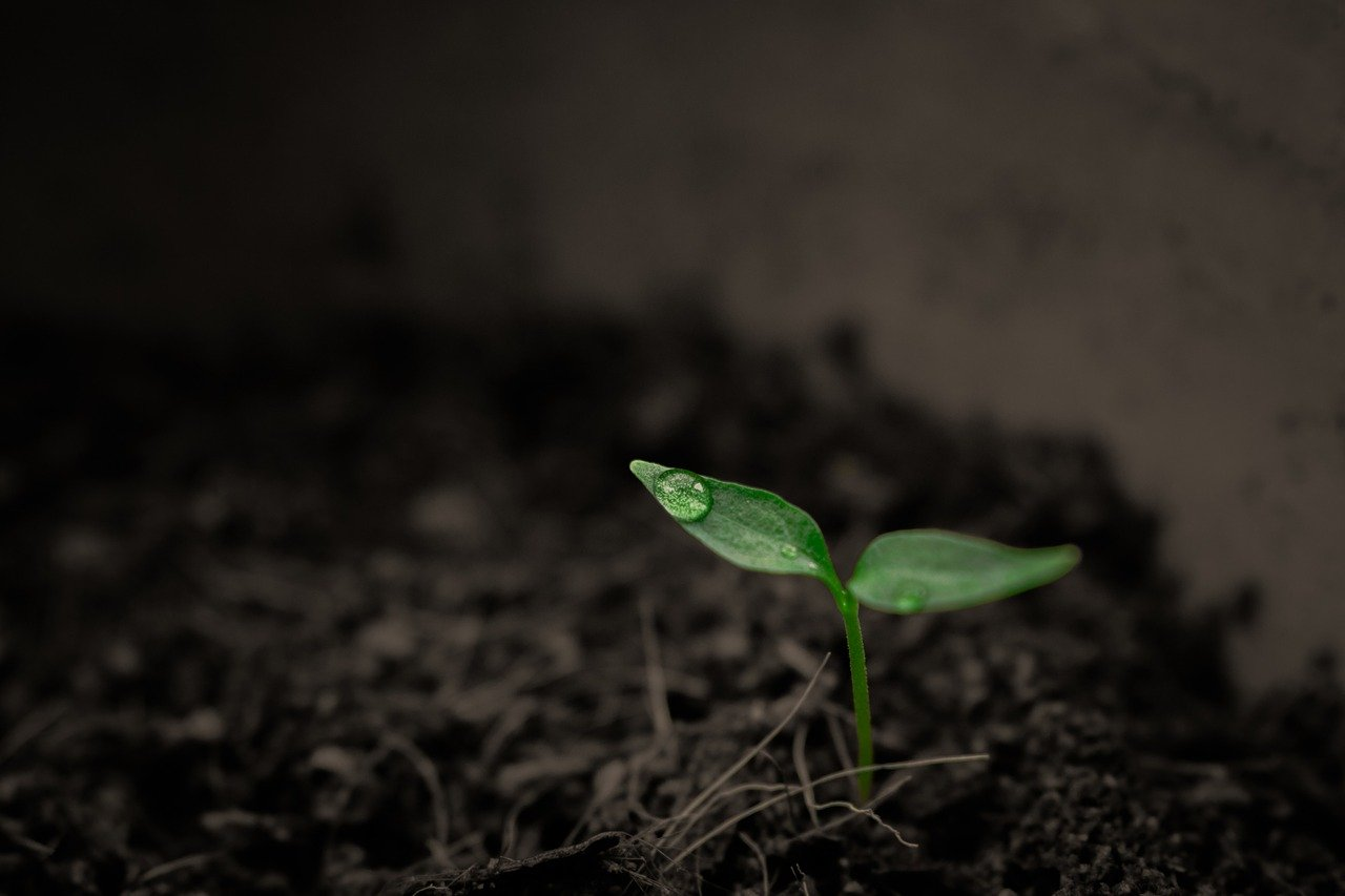 Osservatorio 10-07 germoglio seme